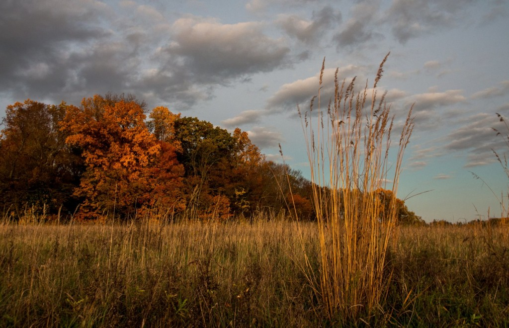 Photo of a meadow against a backdrop of autumn colors. Photo by Karen Appel.